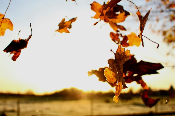 Orangea löv som svävar i luften. I bakgrunden är solen på väg att gå ner. Fotograf: Brownwyn