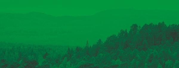 En vybild över ett skogslandskap.